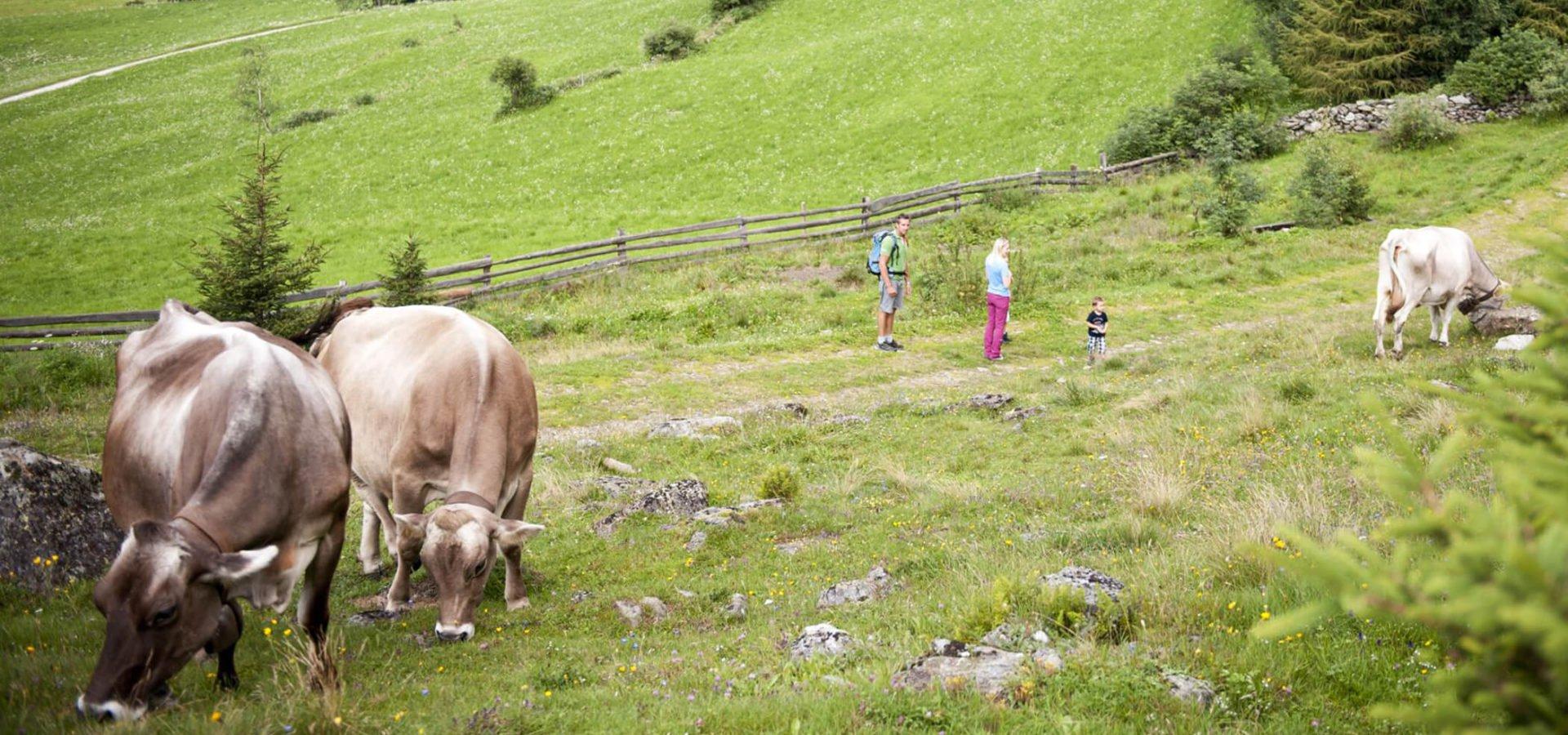 Familienurlaub-auf-dem-Bauernhof